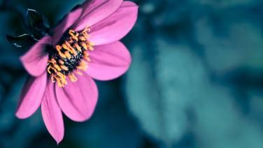 Sevdiğinize Anlamlı Birer Hediye: Çiçekler